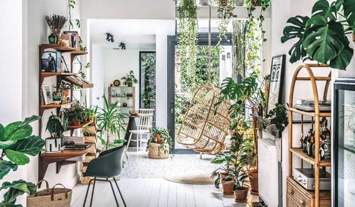 Indoor Plants Trending in 2021